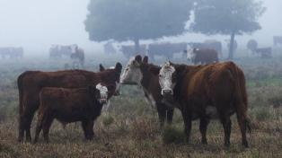 La Cámara de Exportadores cuestionó el nuevo esquema de exportaciones de carnes