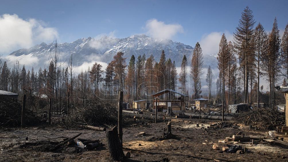 Los incendios arrasaron con 14 mil hectáreas de bosques. Pero la solidaridad puede más. (Fotos: Eugenia Neme)