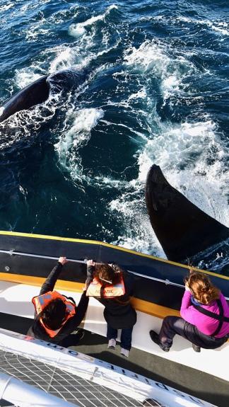 """""""Si hay una buena temporada de ballenas, tendremos turistas que consuman servicios"""" en toda la región, dijo Arcioni. Foto Maxi Jonas."""