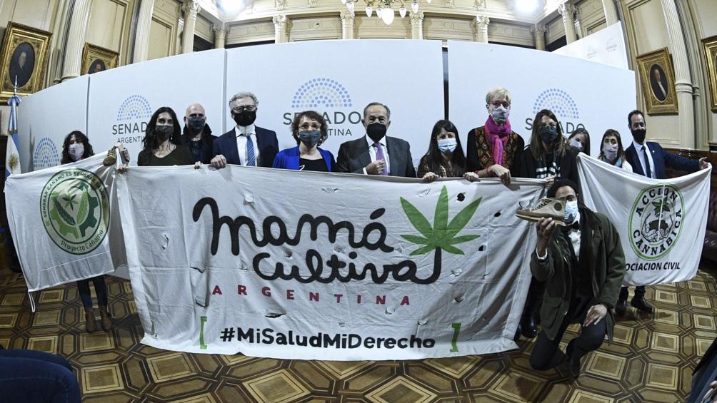 El proyecto de ley que establece un marco regulatorio de la cadena de producción, industrialización y comercialización de la planta de cannabis.