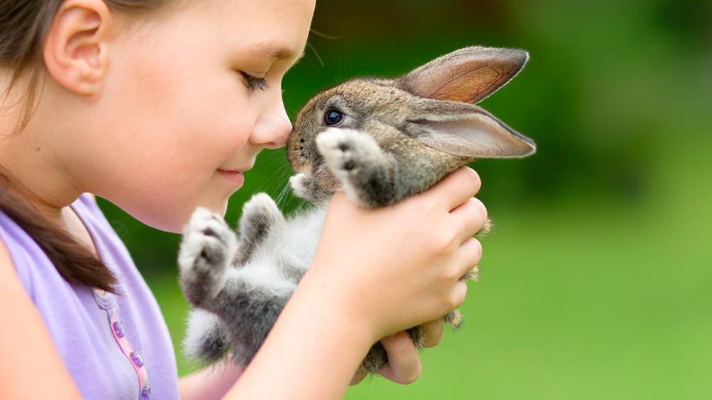 El consumo consciente y crítico tiene como primera premisa la no utilización ni explotación de animales.