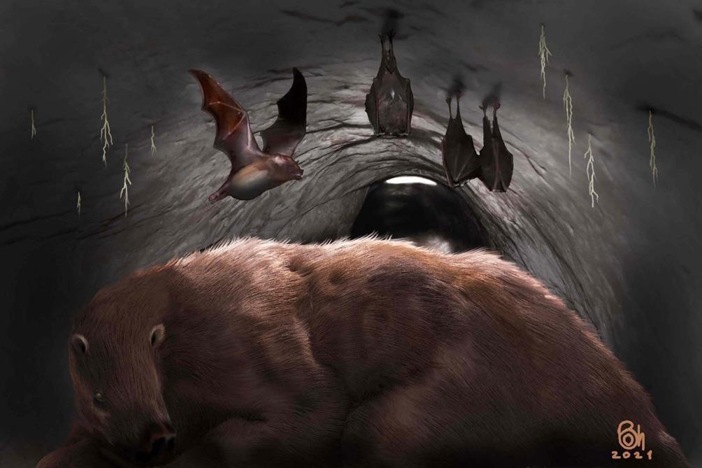 El resto fósil fue encontrado en una madriguera que podría haber pertenecido a un perezoso gigante que vivió hace cerca de 100 mil años en la región.