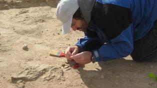 Encuentran el fósil de un vampiro gigante en una cueva al sur de Miramar