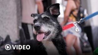 Celebran el Día Mundial del Perro y concientizan sobre el abandono de las mascotas
