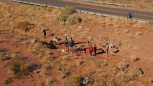 Descubren restos fósiles de un dinosaurio hervíboro de entre 96 y 99 millones de años