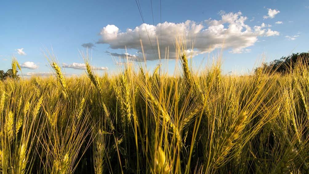 ¿Los alimentos son bienes culturales? Un debate que atraviesa prácticas y patrimonios
