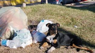 Una ONG platense convocó a un acto para exigir a Garro la castración de gatos y perros