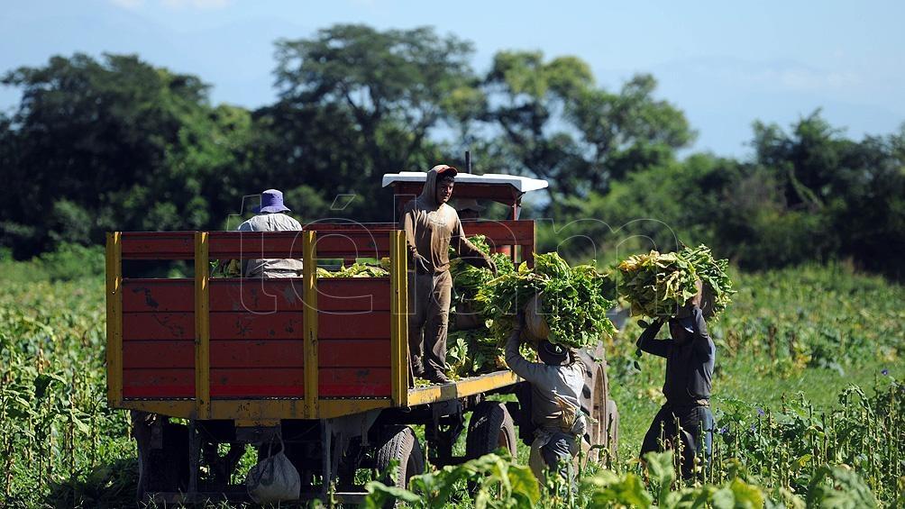 La medida busca promover el empleo registrado y la ampliación de la protección social de los trabajadores rurales (Foto Carlos Brigo)