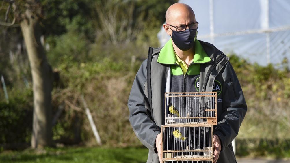 Las aves fueron llevadas al Centro de Rescate de Fauna Silvestre, del Ecoparque.