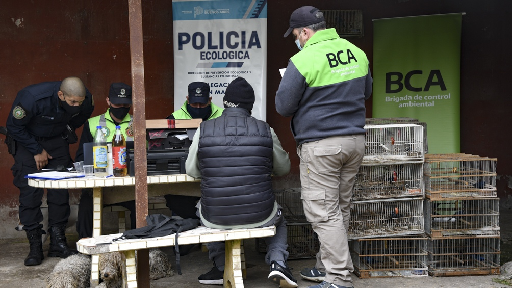 Rescataron aves silvestres en la localidad bonaerense de Del Viso.