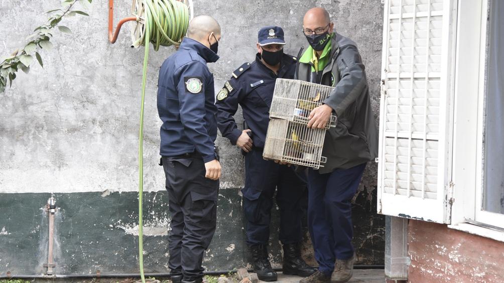 Un total de 137 ejemplares de aves autóctonas fueron rescatadas.