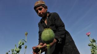 Prohibir o ampliar la producción de heroína, una encrucijada para los talibanes con impacto mundial