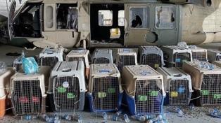 Denunciaron que EEUU abandonó a sus perros en Kabul, pero el Pentágono lo desmiente