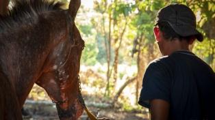 """Se estrena """"Fidel niño valiente"""", un filme épico sobre un niño y su caballo de carreras"""
