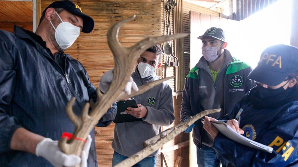 Las piezas secuestradas fueron llevadas para su custodia al Museo de Ciencias Naturales Bernardino Rivadavia.