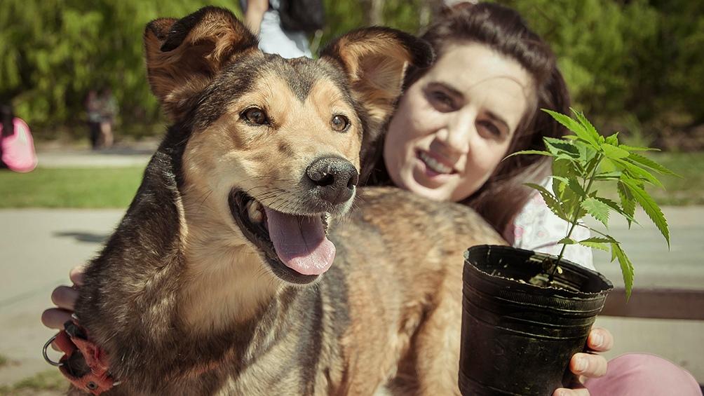 La novedad de este año es el consultorio sobre cannabis medicinal para mascotas.
