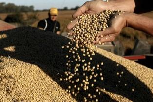 Se descargaron 206.018 toneladas de granos en terminales portuarias de Bahía Blanca