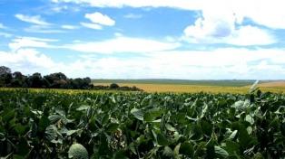 La soja subió más de US$17 en Chicago y cerró la jornada en US$522,5 la tonelada