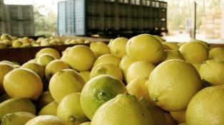 Las lluvias retrasan la cosecha de limones