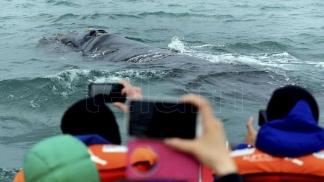 Las excursiones de avistamientos se hacen en lanchas, gomones y catamaranes.