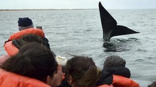 Chubut: sortearán avistajes de ballenas y pases de esquí para incentivar la vacunación