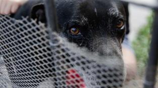 Con registros, chips y multas, buscan controlar la tenencia de perros y evitar ataques
