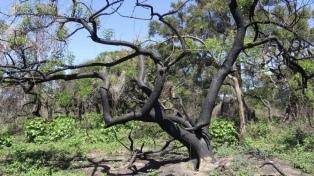 Incorporan 2.600 hectáreas del Delta del Paraná como áreas protegidas