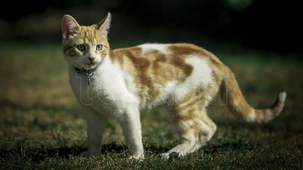 El primer caso de Covid positivo en el país se dio en un gato.