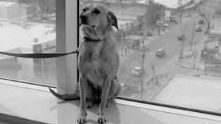 �El perro que no calla� de Ana Katz, Mejor Película en el Festival de Cine de Colonia