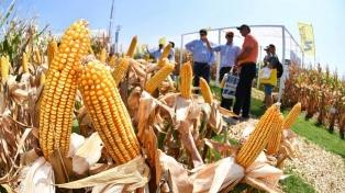 Se consolida el avance de trigo y maíz y la soja volverá perder área de siembra