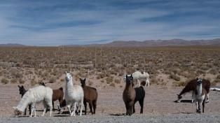 Documentan en un mapa mundial las migraciones de herbívoros en la Argentina